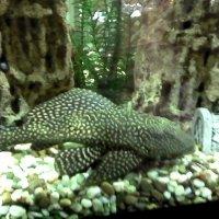 В аквариуме :: Svetlana Lyaxovich