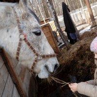 Я люблю свою лошадку :: Daria Zhdanova