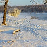 На берегу Кубани :: Бронислав Богачевский