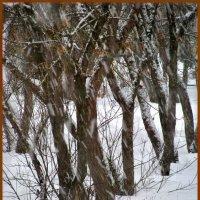 Снег идет :: Наталья