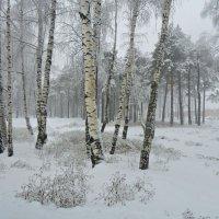 Настроение  зима.. :: Galina ✋ ✋✋