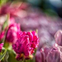 Весна :: Ксения Базарова