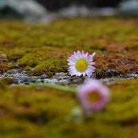 Весна !!! :: Вен Гъновски