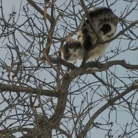 Весна...коты прилетели :: liudmila drake