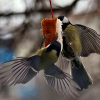 Кстати о птичках... А может быть про Ньютона законы... :: Александр Резуненко