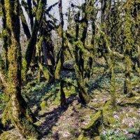 Самшитовый лес :: Tata Wolf