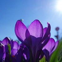 Зовущий и согревающий свет... :: Galina Dzubina