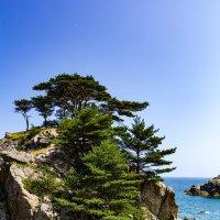 И на камнях растут деревья :: Сергей Бойко