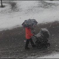 Проказы матушки зимы :: galina bronnikova