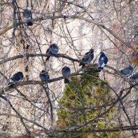 Февраль,голуби в парке... :: Тамара (st.tamara)