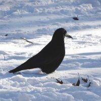 Чёрно-белое фото в зимнем парке... :: Тамара (st.tamara)