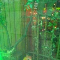 """Интерьер витрины кафе """"Усадьбы"""" (фото №2). (Санкт-Петербург) :: Светлана Калмыкова"""