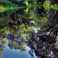 Глубокие отражения летнего пруда... :: Sergey Gordoff