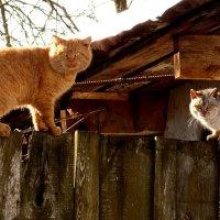 март...коты...закон природы :: Александр Прокудин