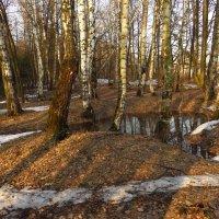 Март в парке :: Андрей Лукьянов