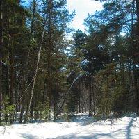 в лесу :: ОКСАНА ШВЕЦ