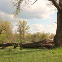 весна на Карамане :: Вадим Кнушевицкий