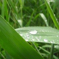 После дождя :: Дашенька Лабуткина