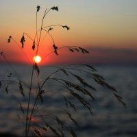Море,солнышко и травка :: Galina Kazakova