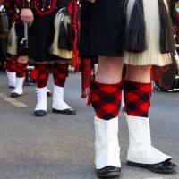 Шотландские ножки :: Svetlana Kas