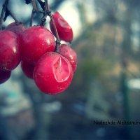 зима :: Надя Тарасюк