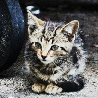 Совсем еще котёнок :: Анастасия Щербакова