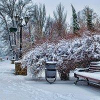 Зимний бульвар... :: Сергей Офицер