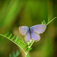 бабочка :: Никита Храмцов