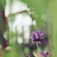 Фиолетовый красавец :: Larisa Oparina