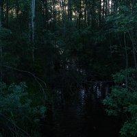лес :: Лип Лепет