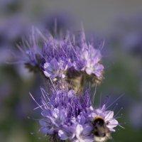 Цветок :: Александр Лбов