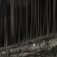 Лес рубят, щепки летят... :: Лара Leila
