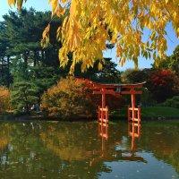 Осень в японском уголке :: Galina Kazakova