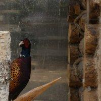 птица :: Гузель Асянова