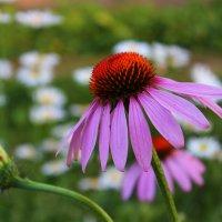 в саду :: Даша Мягкая