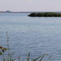 Река Маныч :: Марина Труфанова