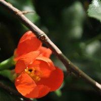 цветы :: Іра Ткачук