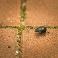 Trip of a bug :: Alex Okhotnikov