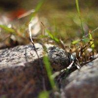 Камни, трава, весна :: Сергей Бернацкий