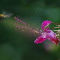 второй, второй, валим, ваааалиииим.... цветок-агрессор! :: Игорь В. Капустин