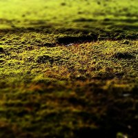 Зелень :: JaneJane One