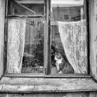 Портрет в рамке :: Александр Максимов