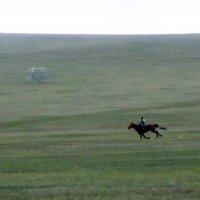 Скачки в Монгольской степи :: Валерий Струк