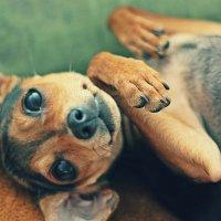 Случайный кадр любимой собаки! :: Natasha Voronina