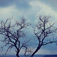 Силуэт деревьев :: Natasha Voronina