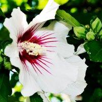 цветок :: Владислава Филатова (Bast)