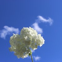 В облаках :: Mariya laimite