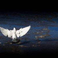 миру мир :: Роман Яхин