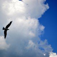 Чайка :: Nataly Egorova
