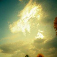 Небо над подсолнухами :: Ingirinka Слюсарева Ирина
